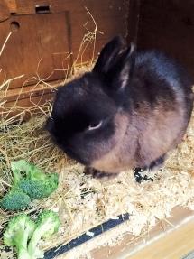 rabbit1 (2)