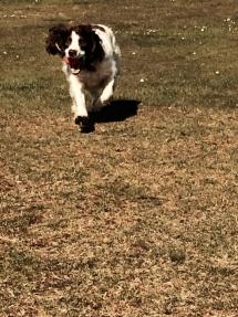sillydog1 (2)