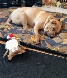 sleepingdog (2)