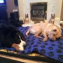 sleepingdogs2